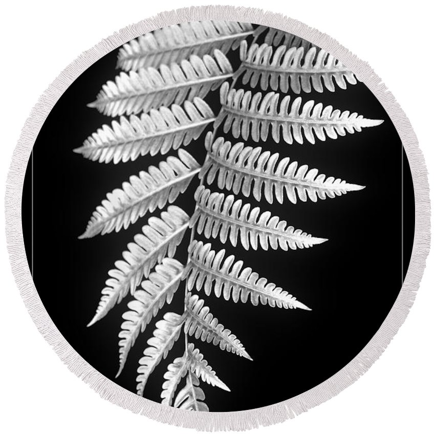 Australia; Floral Round Beach Towel featuring the photograph Fern Dance by Holly Kempe
