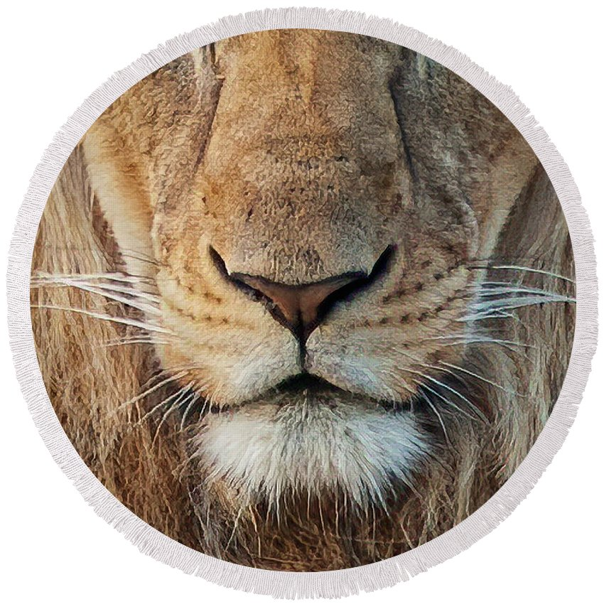 Lion Round Beach Towel featuring the photograph Lion by Steven Sparks