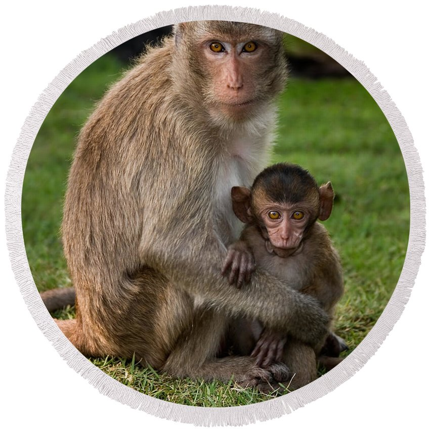 3scape Round Beach Towel featuring the photograph Macaque Monkey Family by Adam Romanowicz