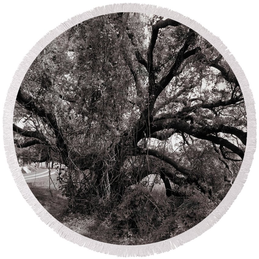 Church Round Beach Towel featuring the painting Magnolia Cemetery Tree by James Christopher Hill