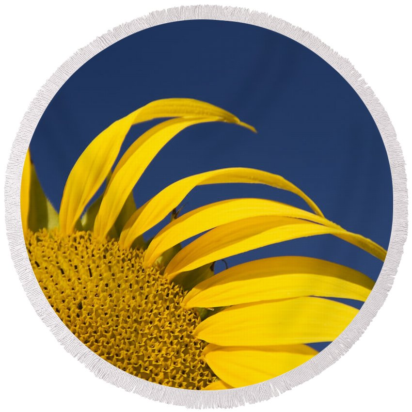 3scape Round Beach Towel featuring the photograph Sunflower by Adam Romanowicz