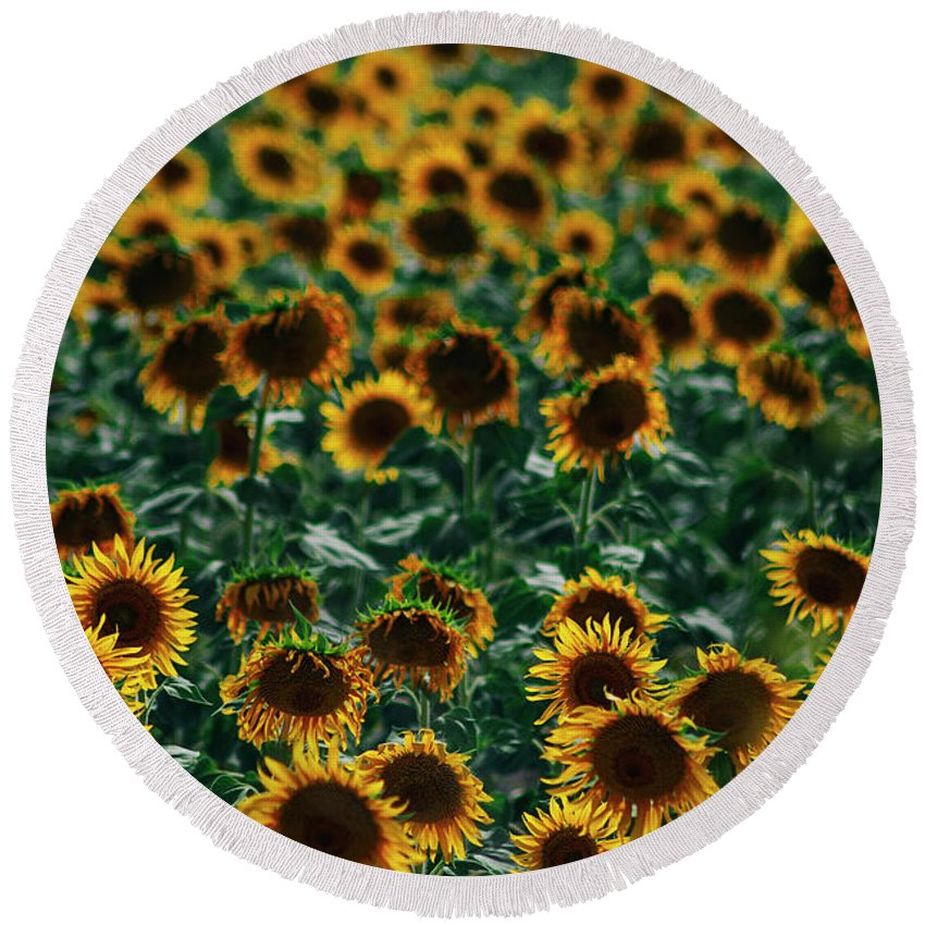 Backlight Round Beach Towel featuring the photograph Sunflowers Field by Vicente Sargues