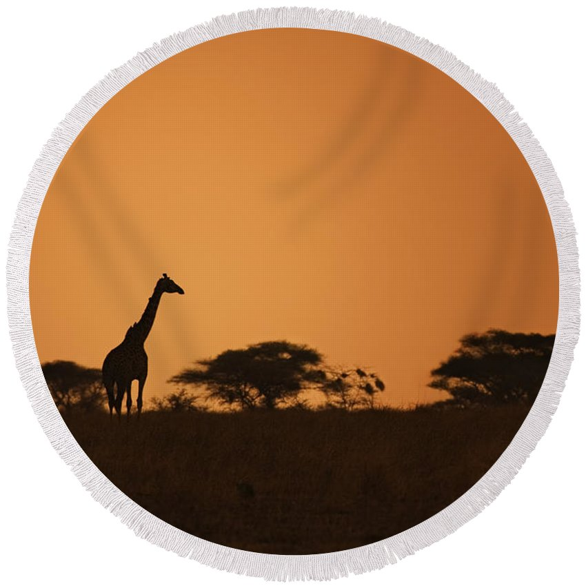 3scape Round Beach Towel featuring the photograph Sunset Over Tarangire by Adam Romanowicz