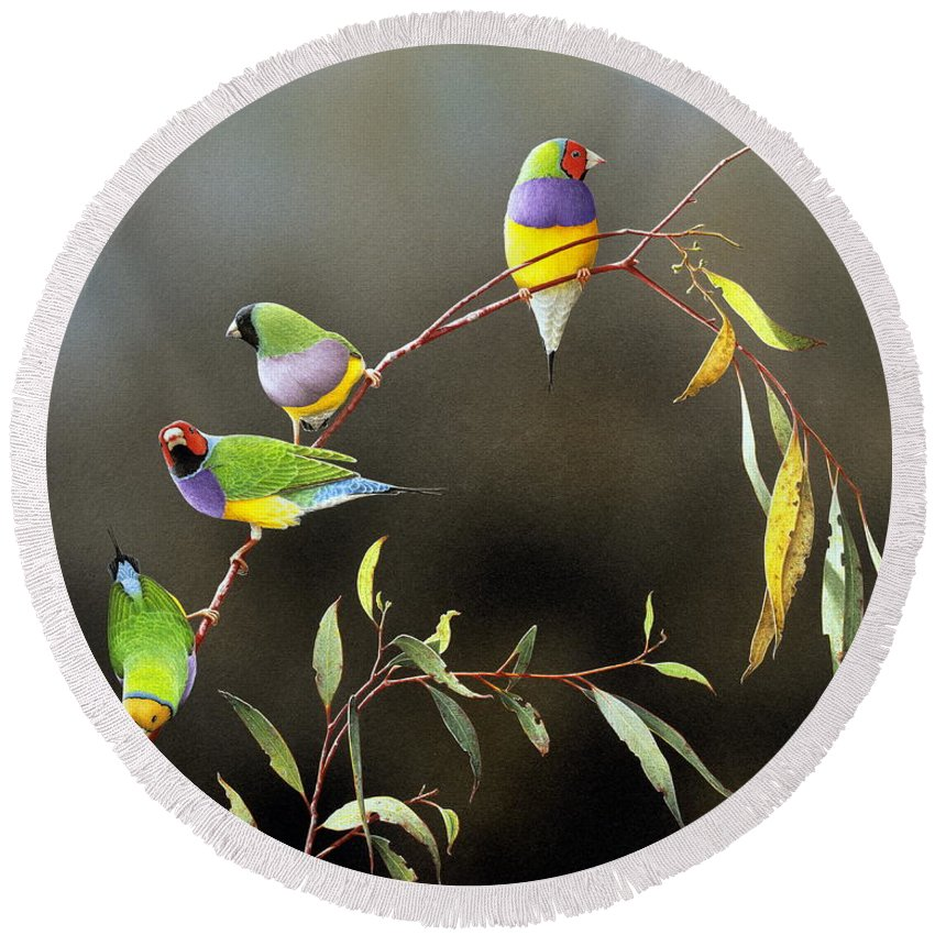 Bird Round Beach Towel featuring the painting Three Guys for Every Girl - Gouldian Finches by Frances McMahon