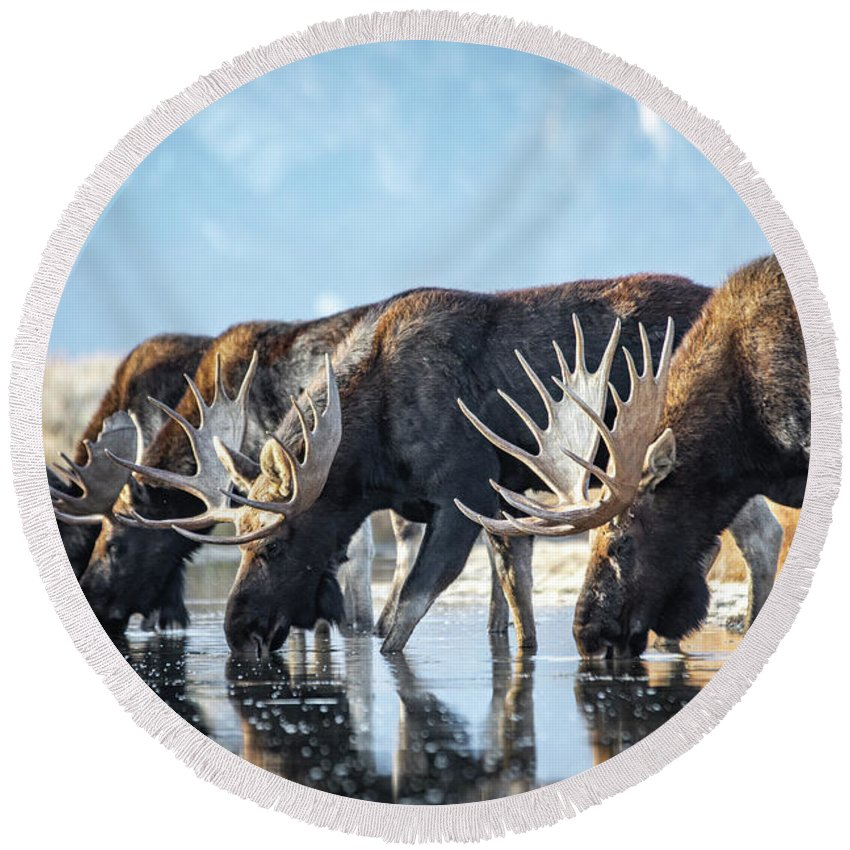 Moose River Round Beach Towels