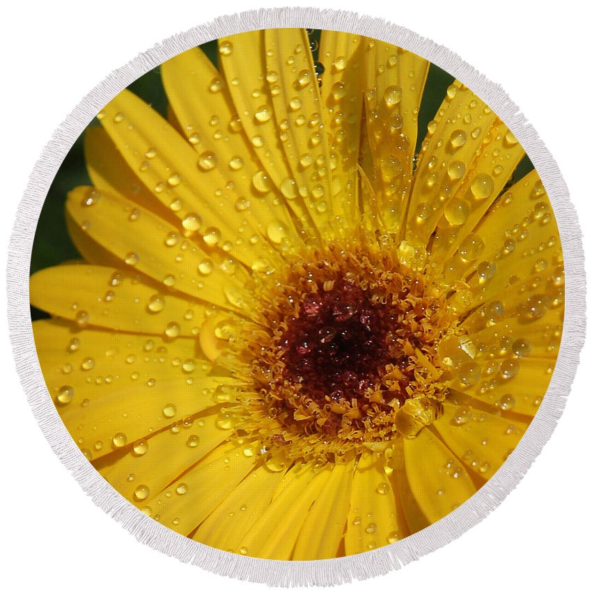 Yellow Round Beach Towel featuring the photograph Yellow Gerbera by Suzanne Gaff