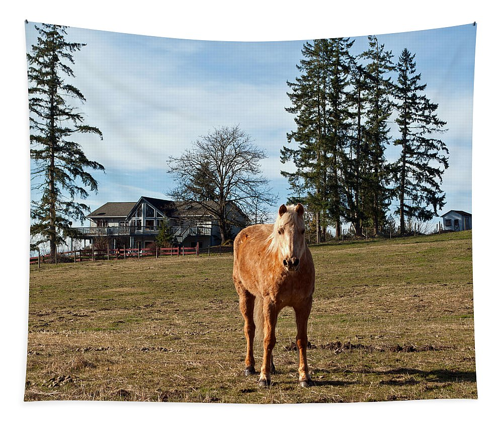 Horse Tapestry featuring the photograph Horse Unbrideled by Tikvah's Hope