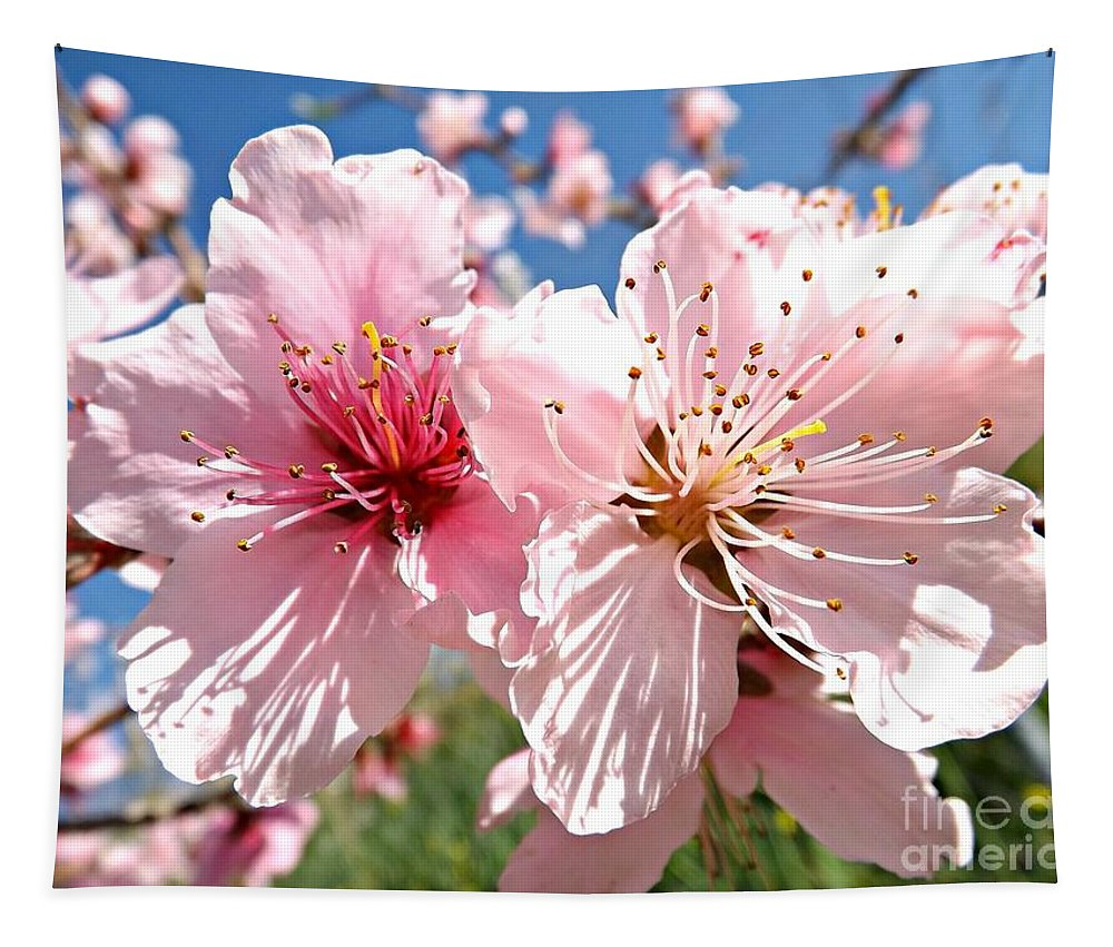 Peach Tapestry featuring the photograph Peach Blossom by Clare Bevan