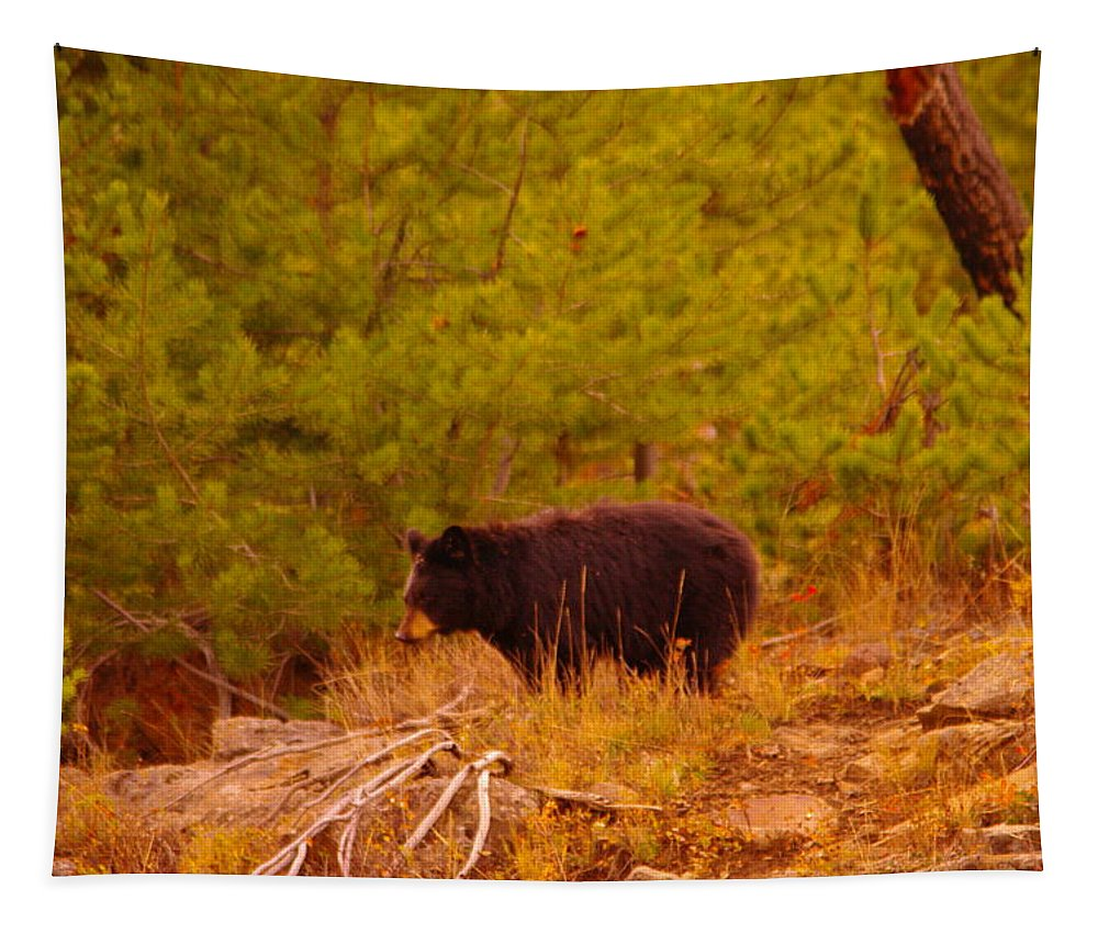 Bear Tapestry featuring the photograph A Black Bear by Jeff Swan
