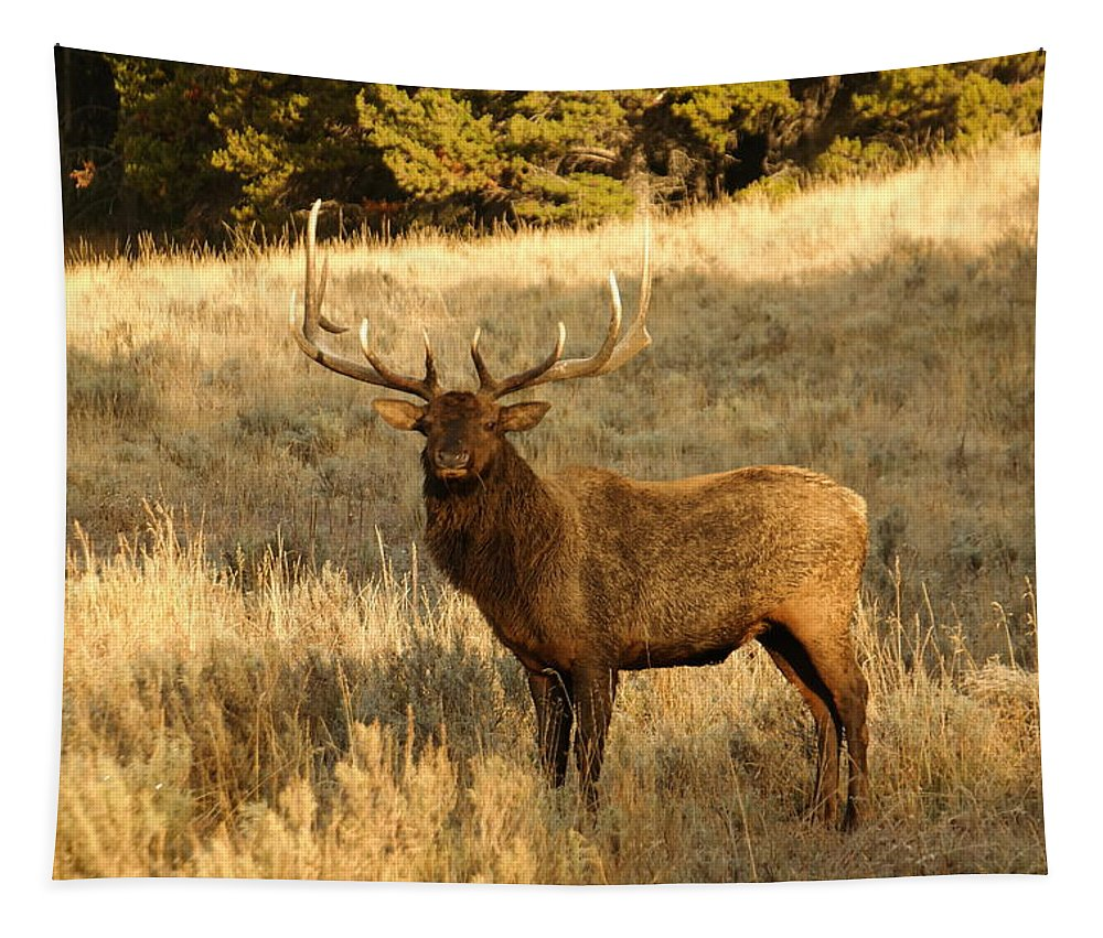 Elk. Bull Tapestry featuring the photograph A Bull Elk In Rut by Jeff Swan