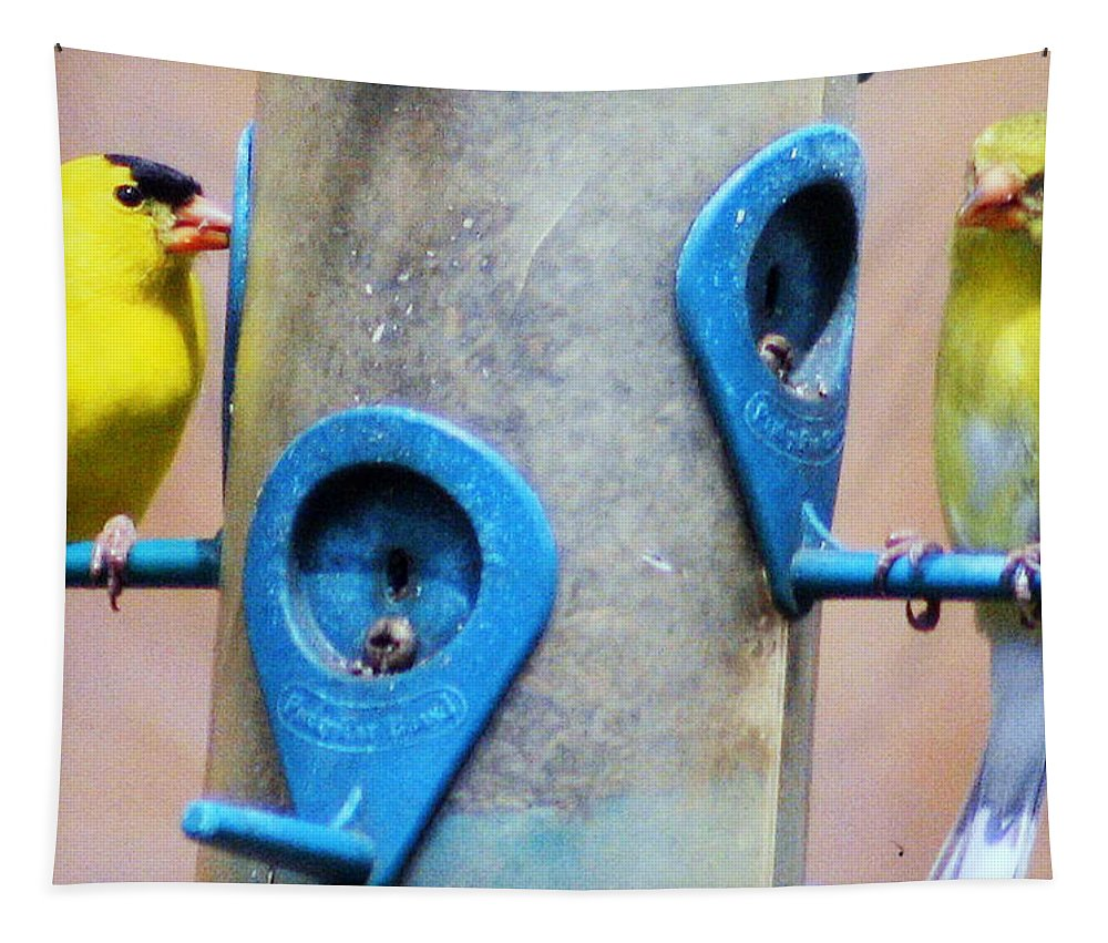 Male And Female American Goldfinch Tapestry featuring the photograph American Goldfinch by Kay Novy