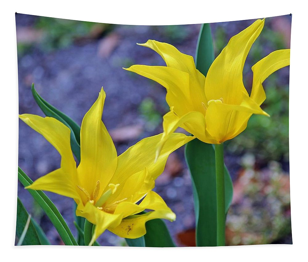 Spring Tapestry featuring the photograph Colors Of Spring by Cynthia Guinn