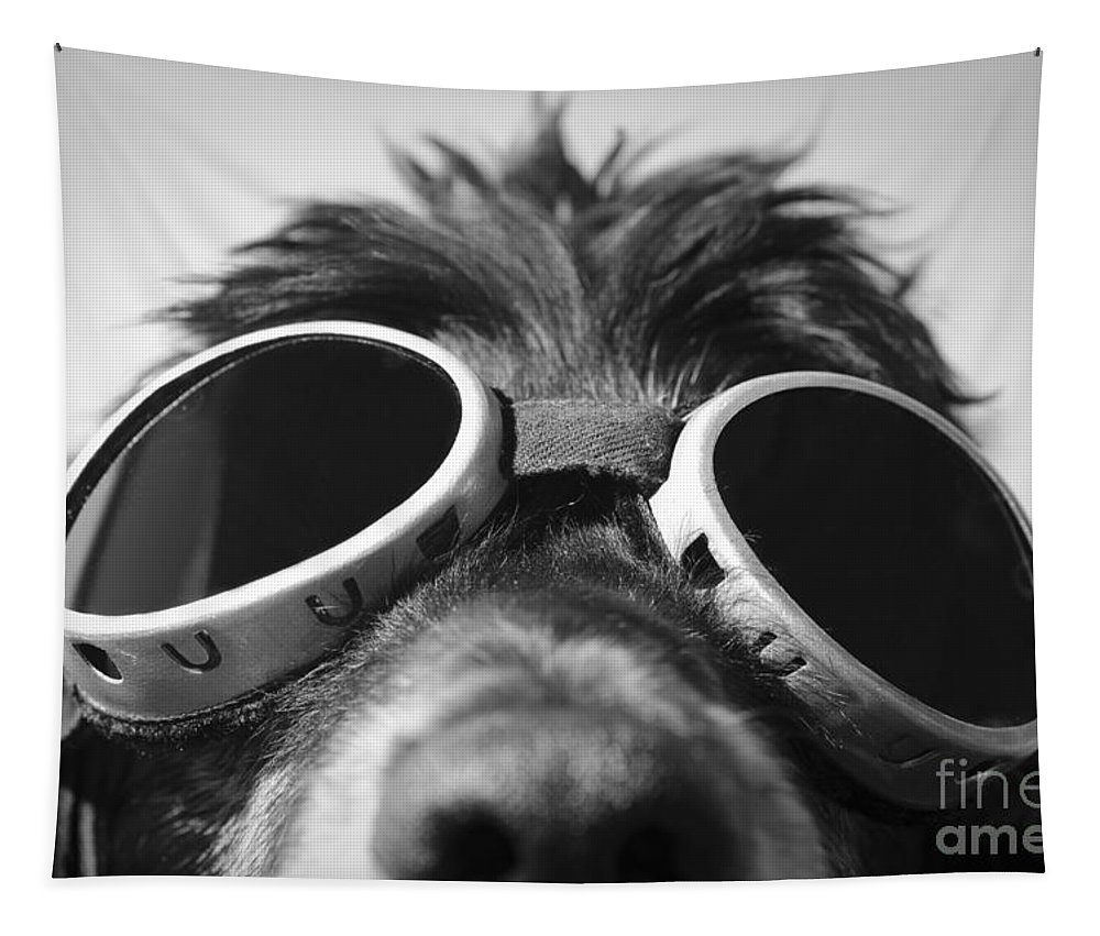 Dog Tapestry featuring the photograph Cool Dog by Mats Silvan