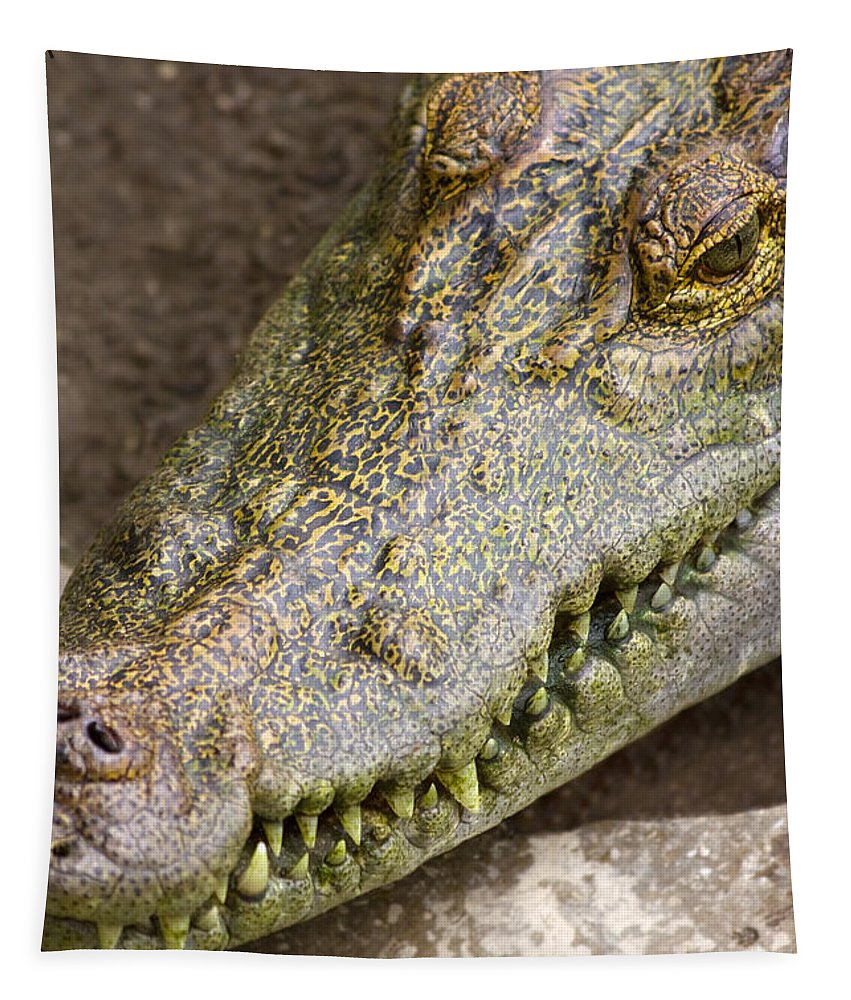 Alligator Tapestry featuring the photograph Crocodile by Jorgo Photography - Wall Art Gallery