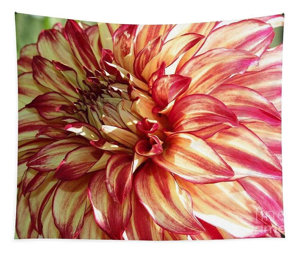Dahlia Tapestry featuring the photograph Dazzling Dahlia by Carol Groenen