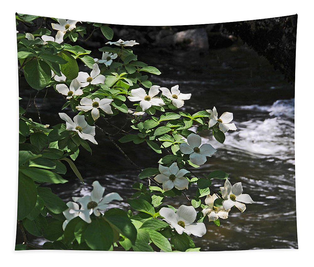 Dogwood Flowers Tapestry featuring the photograph Dogwoods In Yosemite by Lynn Bauer