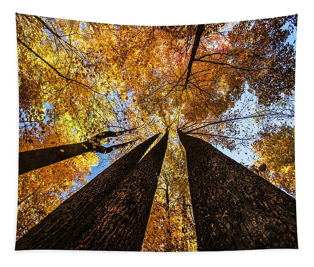 Fall Tapestry featuring the photograph Fall Colors by Tim Palmer