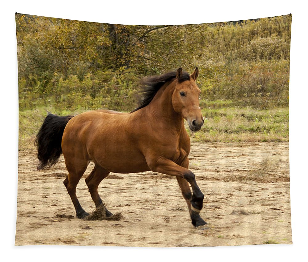 Free Spirit Tapestry featuring the photograph Free Spirit by Annette Persinger