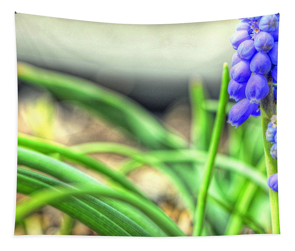 Wendyelliottphotography Tapestry featuring the photograph Grape Hyacinth by Wendy Elliott