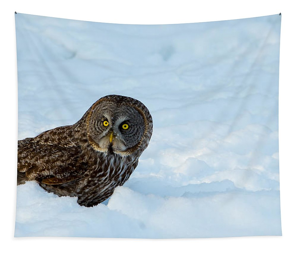 Gray Tapestry featuring the photograph Great Gray Owl by Robert McAlpine