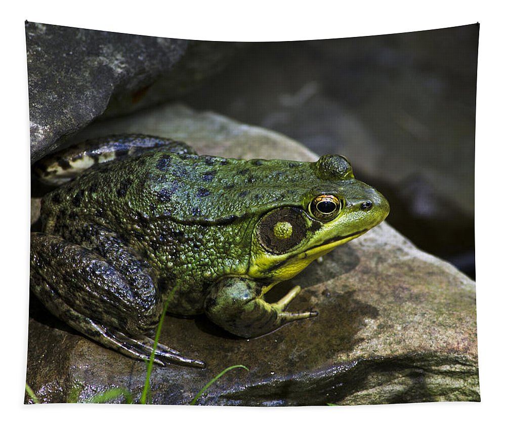 Green Frog Tapestry featuring the photograph Green Frog by Christina Rollo