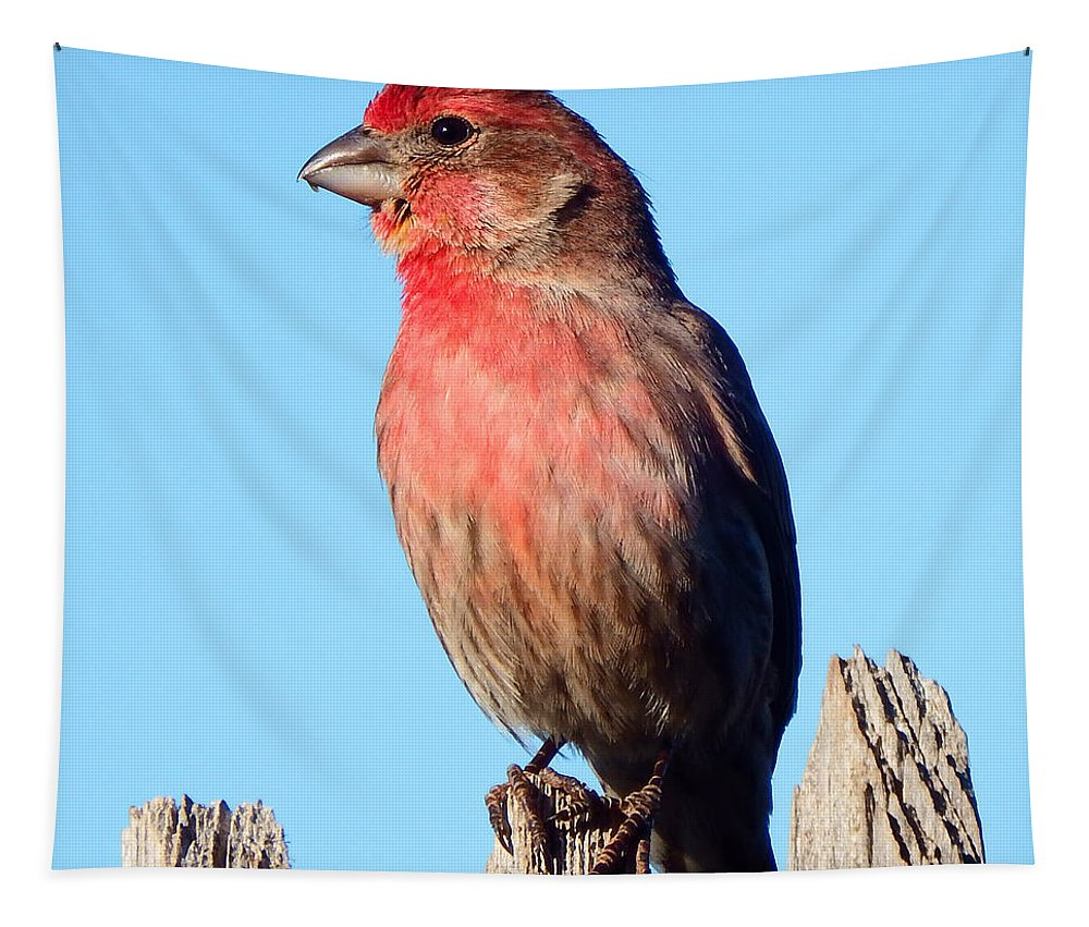 House Tapestry featuring the photograph House Finch by David G Paul