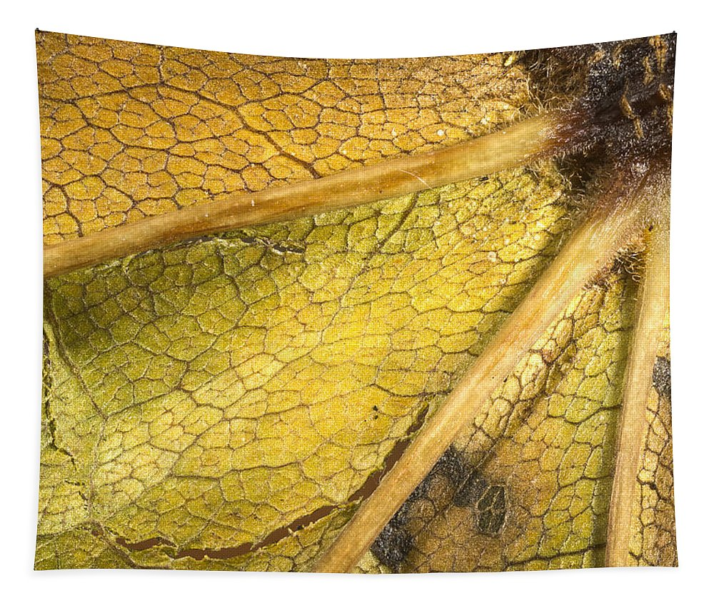 Seasons Tapestry featuring the photograph Maple Leaf Detail by Jean Noren