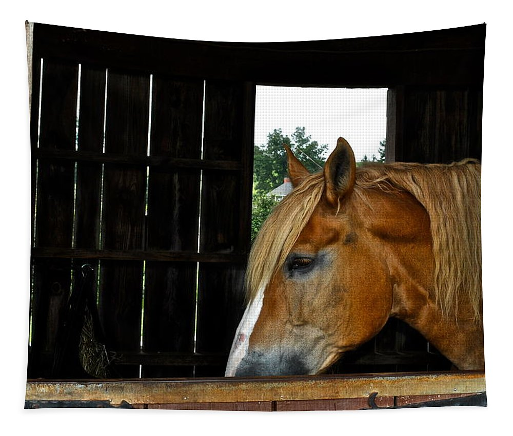 Mr Tapestry featuring the photograph Mr Ed by Frozen in Time Fine Art Photography