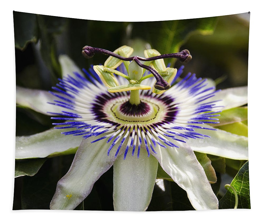 Passion Flower Tapestry featuring the photograph Passion Flower by Saija Lehtonen