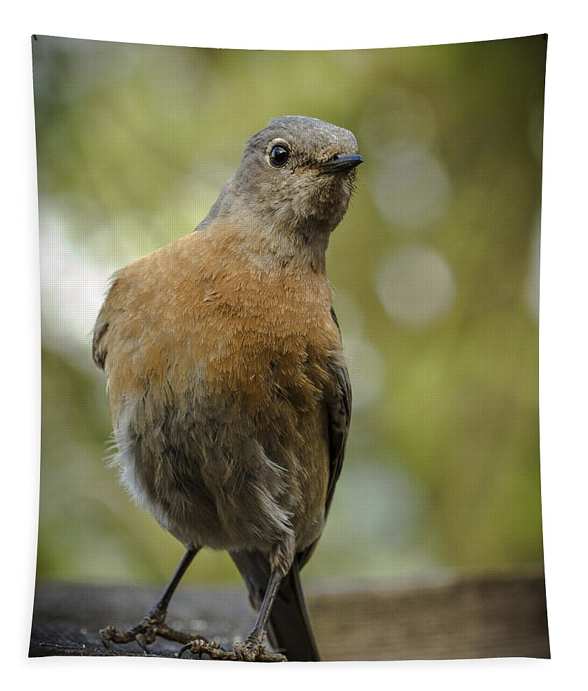 Animals Tapestry featuring the photograph Peering Bluebird by Jean Noren