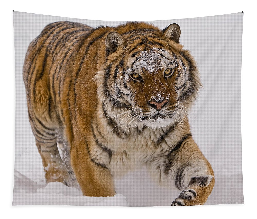 Animal Tapestry featuring the photograph Siberian Tiger In Snow by Jerry Fornarotto