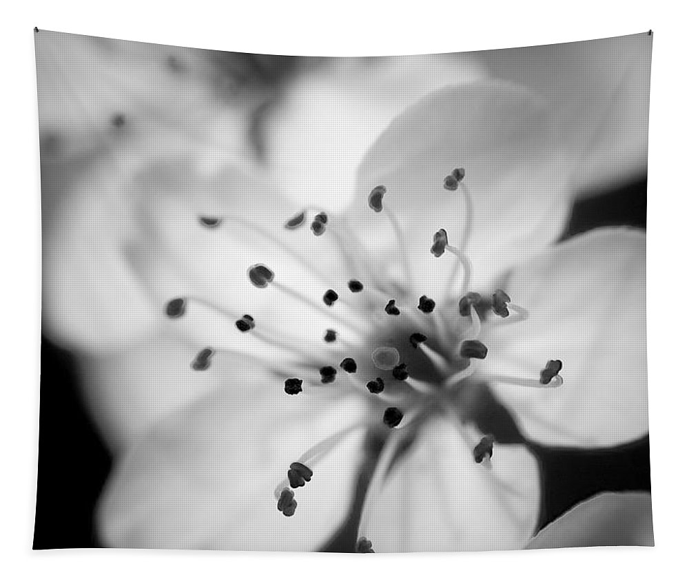 B&w Tapestry featuring the photograph Spring Blooms 6692 by Timothy Bischoff