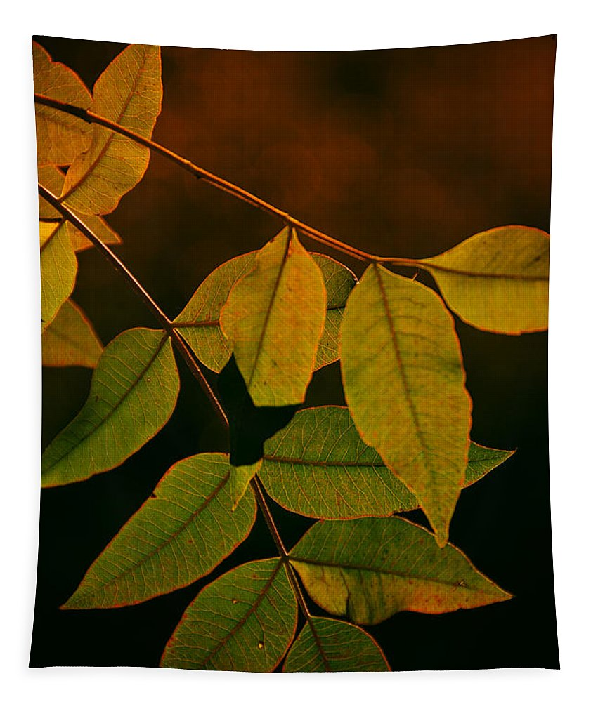 Fall Colors Tapestry featuring the photograph The Colors Of Autumn by Saija Lehtonen