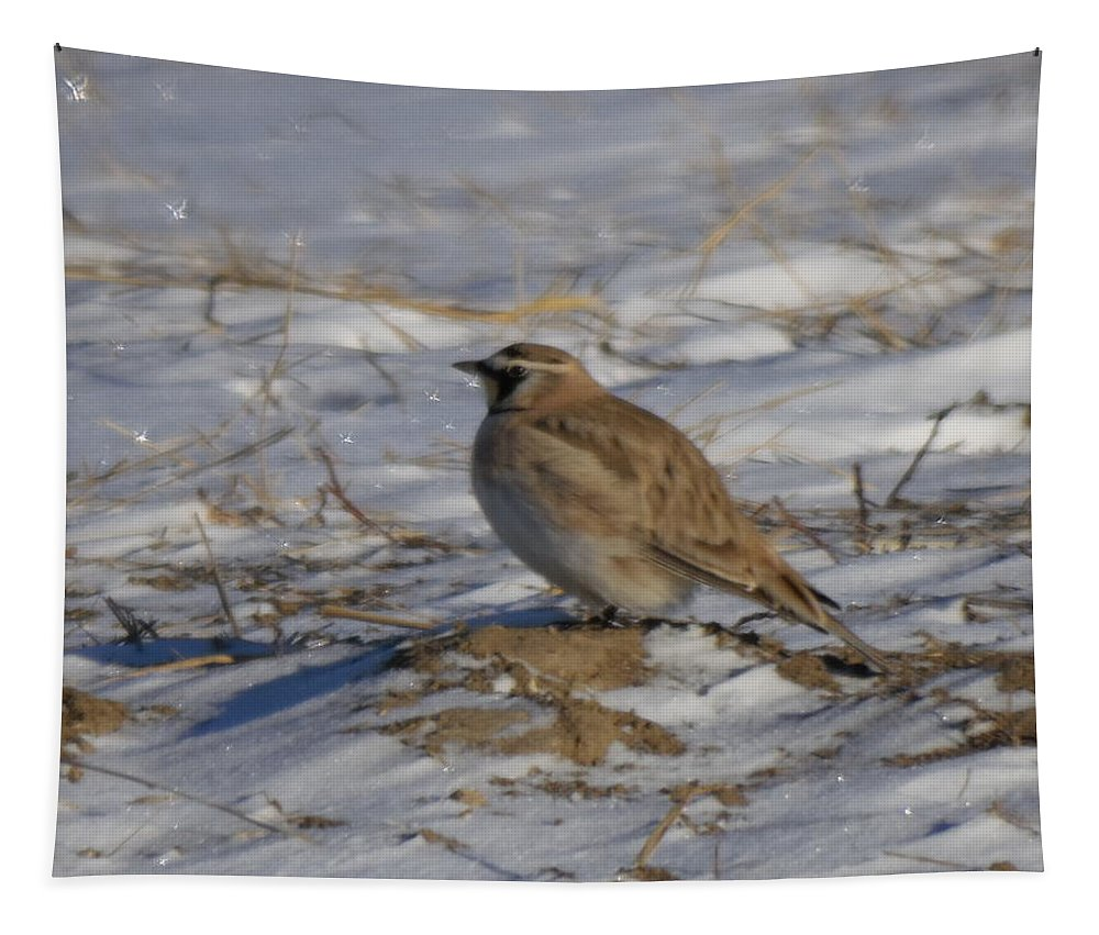Bird Tapestry featuring the photograph Winter Bird by Jeff Swan