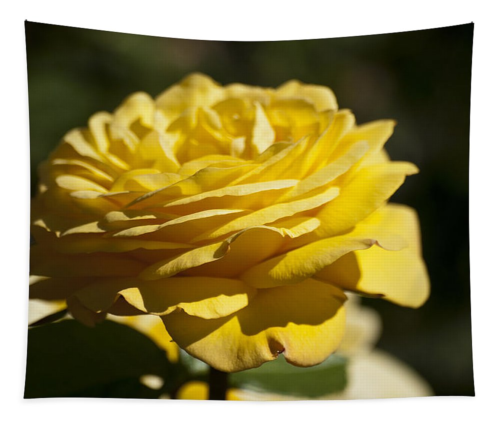 Yellow Rose Tapestry featuring the photograph Yellow Rose by Steve Purnell