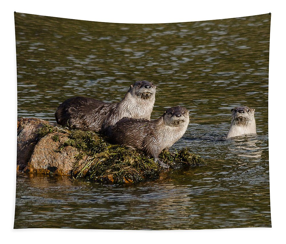 Otters Tapestry featuring the photograph Yellowstone Otters by Yeates Photography