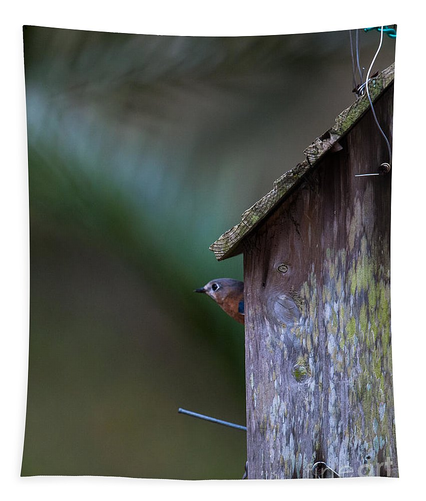 Sialia Tapestry featuring the photograph You Looking At Me by Dale Powell