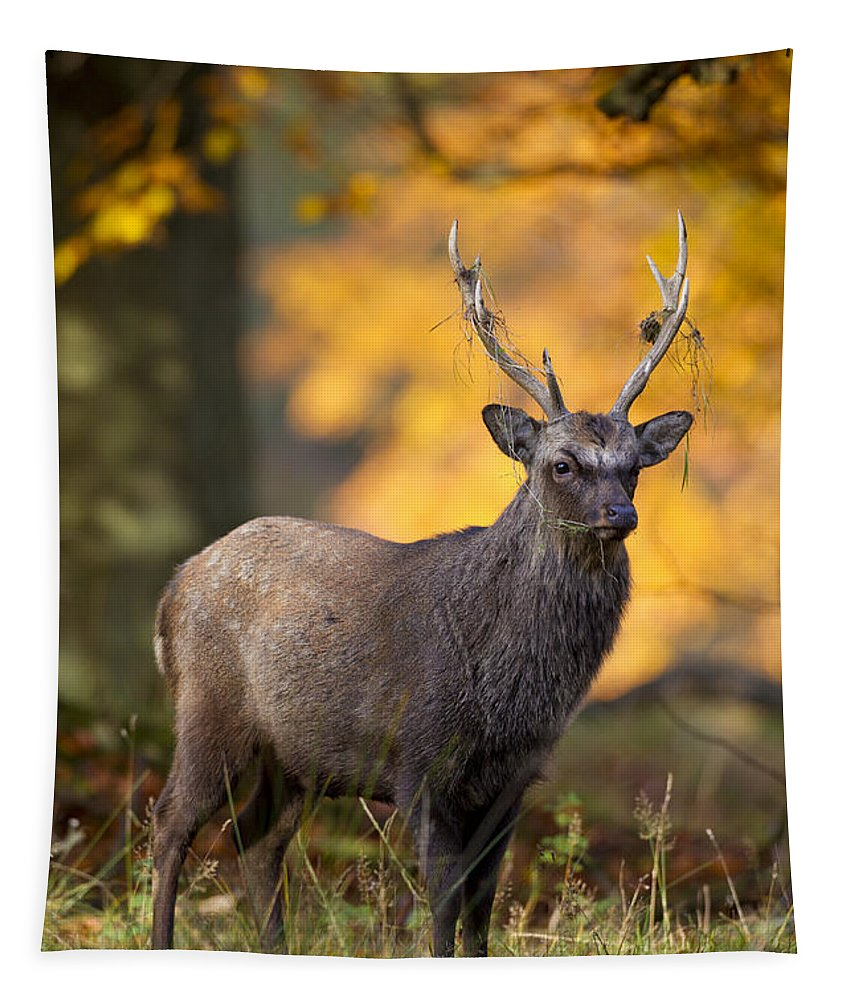 Sika Deer Tapestry featuring the photograph 110307p073 by Arterra Picture Library
