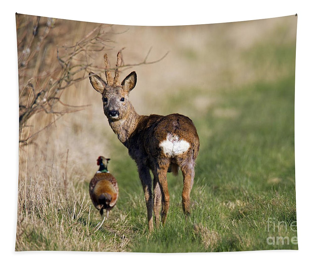 Common Pheasant Tapestry featuring the photograph 130201p187 by Arterra Picture Library