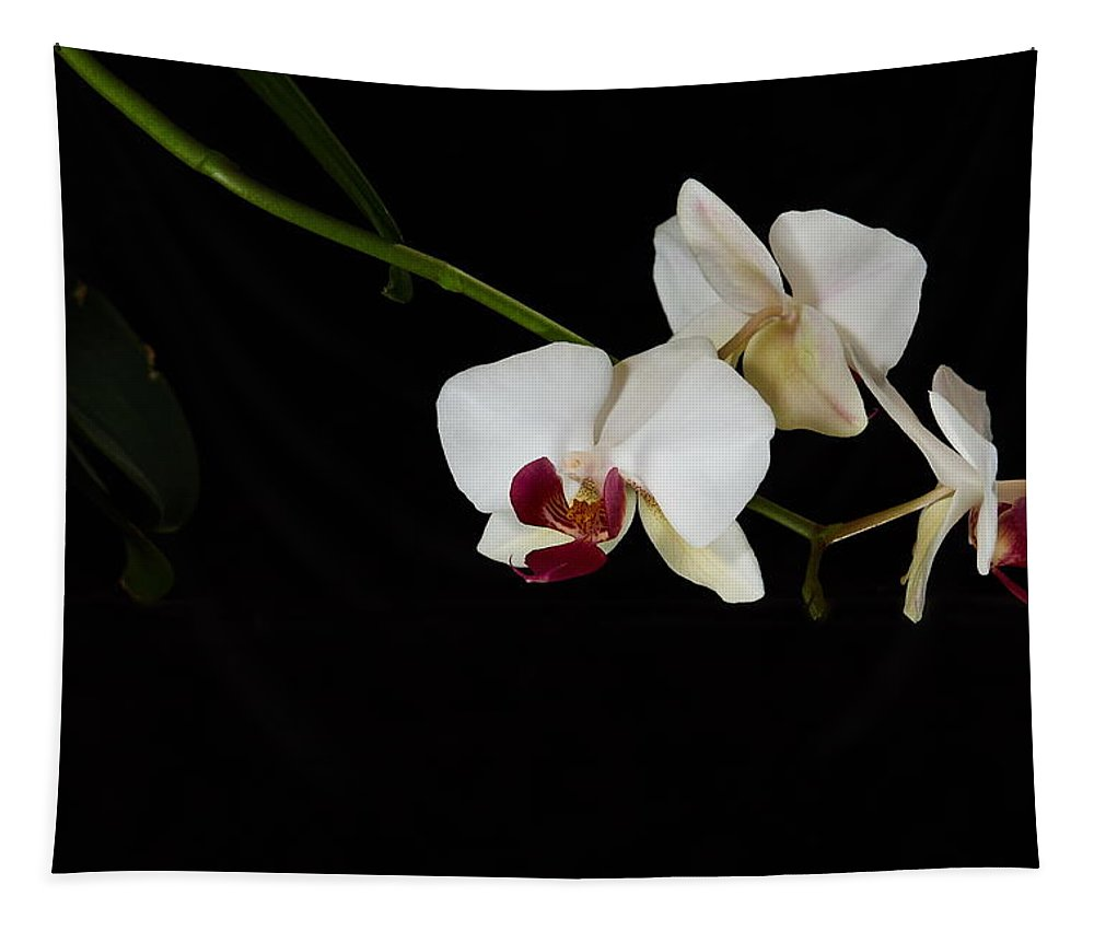 Kukka Tapestry featuring the photograph Orchids by Jouko Lehto