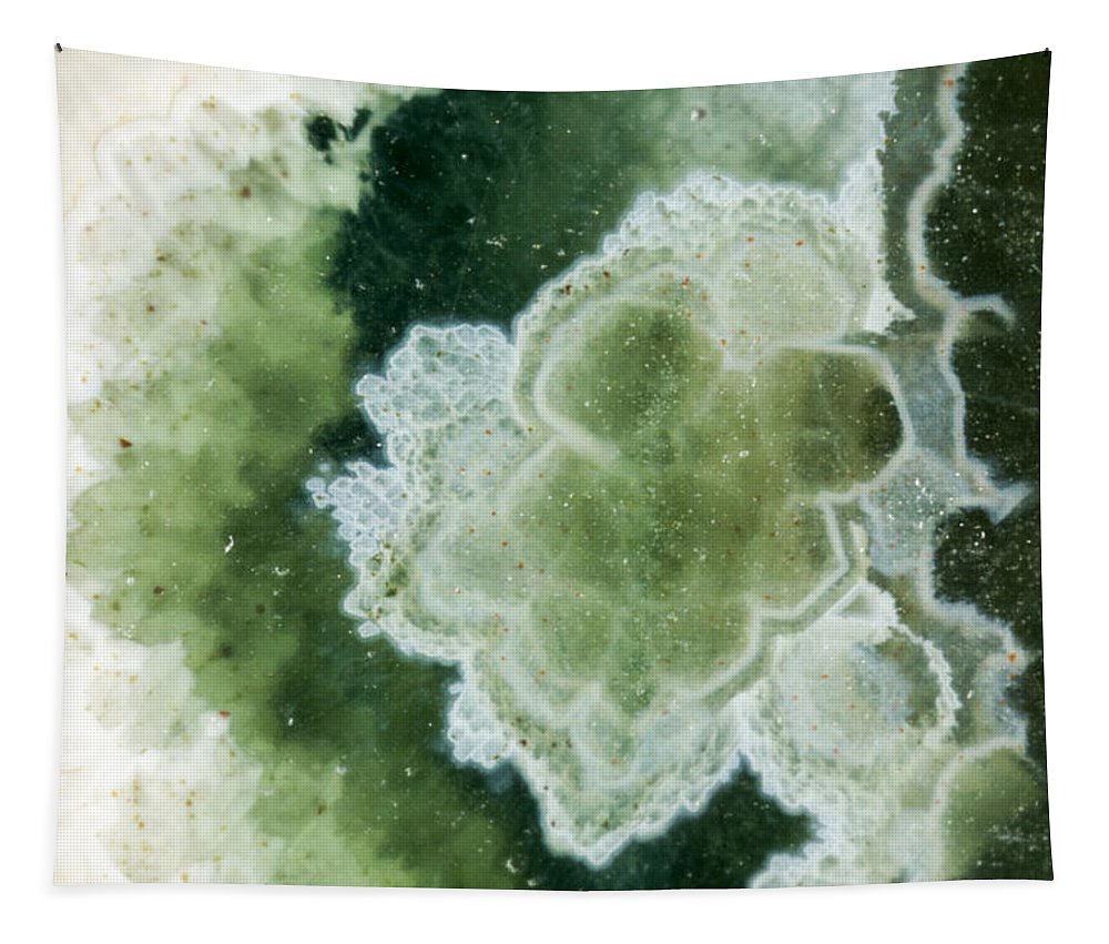 Design Tapestry featuring the photograph Rock Star by Jean Noren