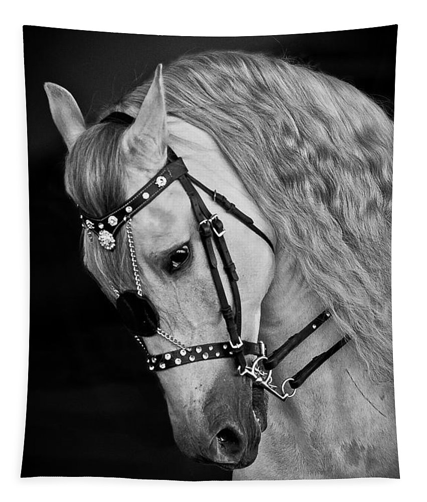Andalusian Tapestry featuring the photograph Andalusian by Wes and Dotty Weber