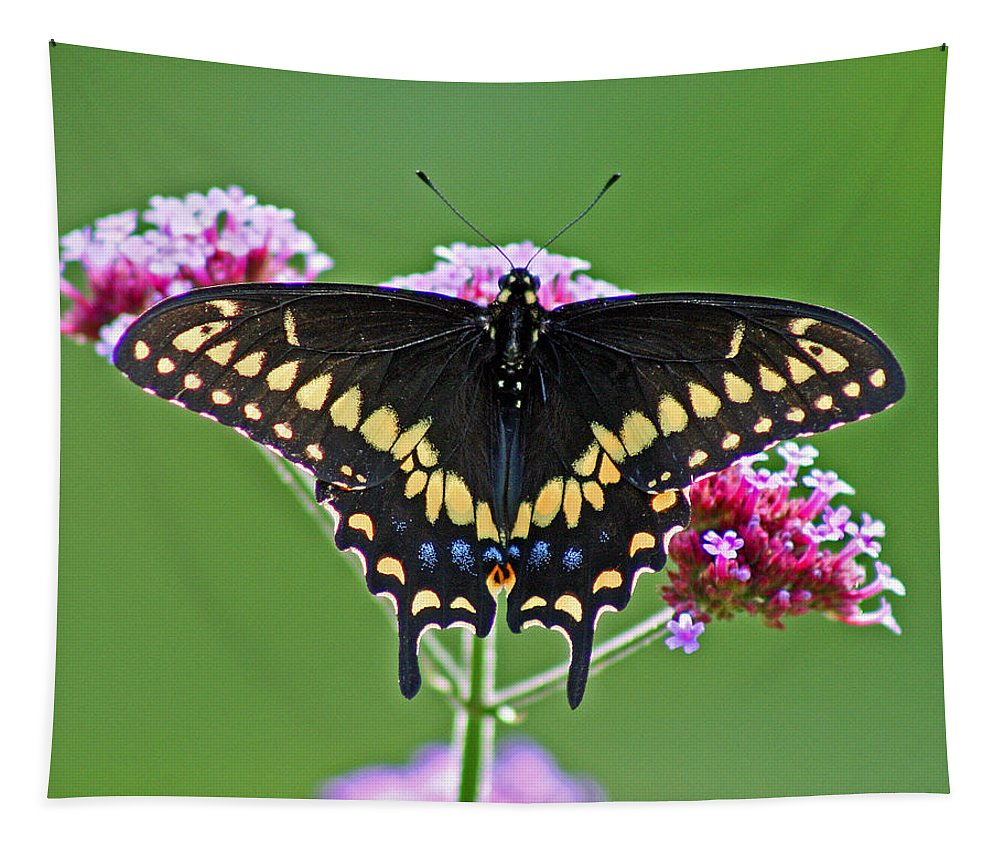 Tapestry featuring the photograph Black Swallowtail Butterfly by Karen Adams