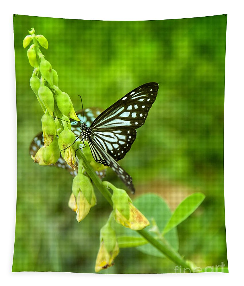 Butterfly Tapestry featuring the photograph Blue Butterflies In The Green Garden by Gina Koch