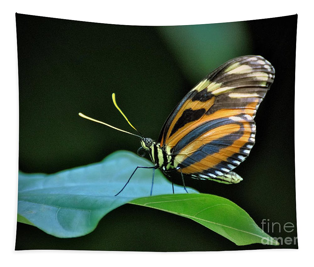Butterfly Tapestry featuring the photograph Butterfly by Savannah Gibbs