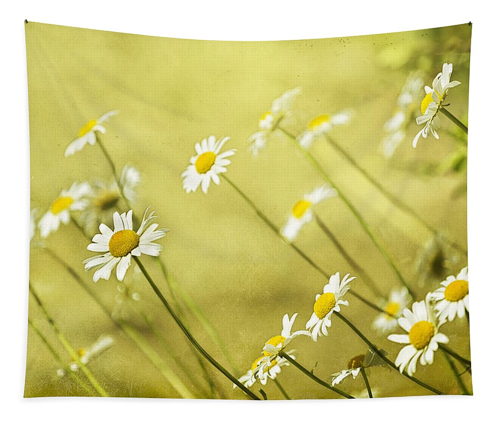 Daisies Tapestry featuring the photograph Daisies by Belinda Greb