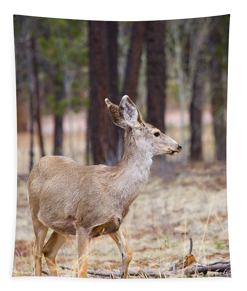 Mule Deer Tapestry featuring the photograph Easter Does by Steve Krull