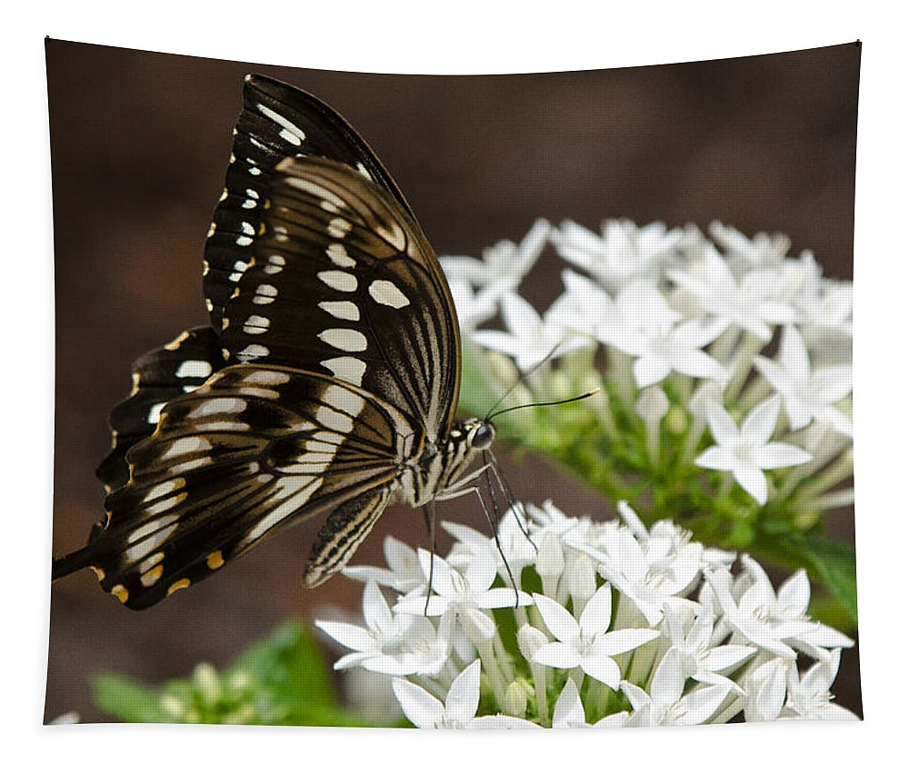 Giant Swallowtail Butterfly Tapestry featuring the photograph Giant Swallowtail Butterfly by Saija Lehtonen
