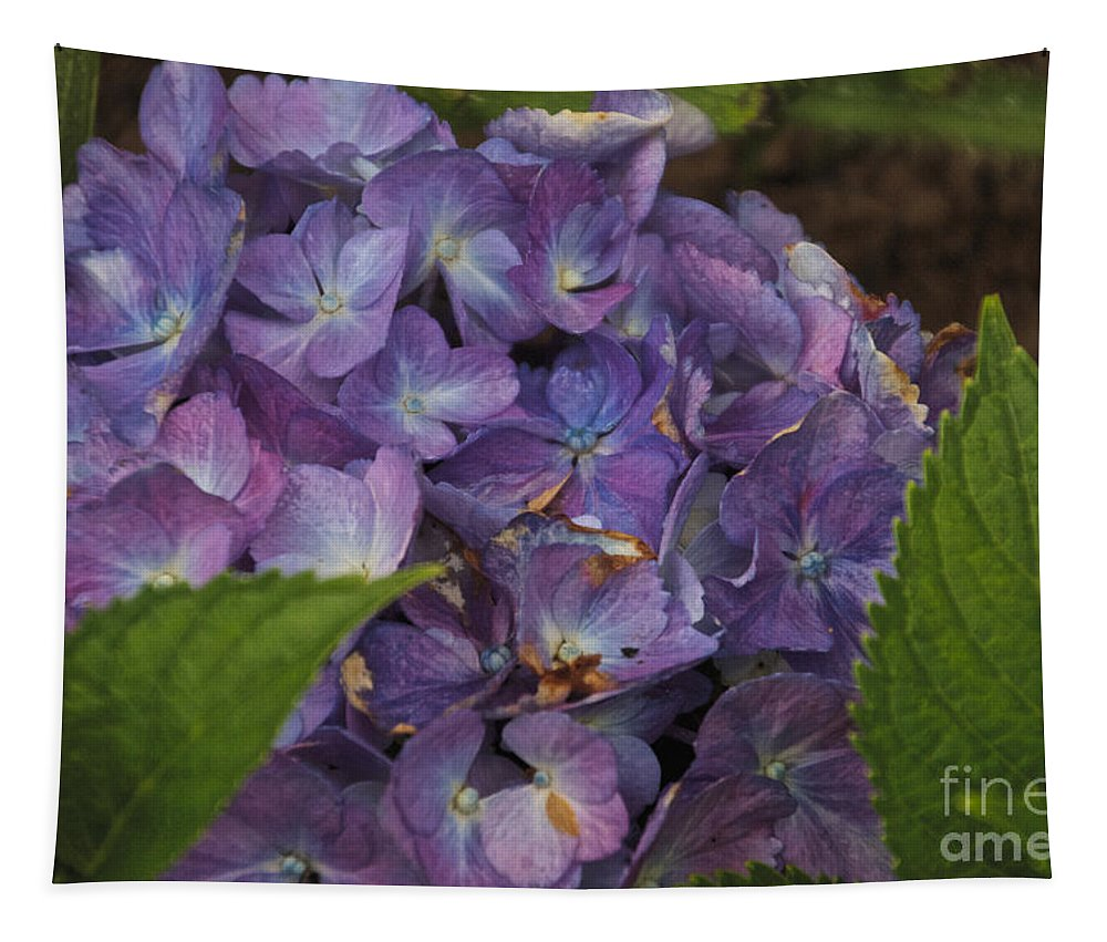 Hydrangea Tapestry featuring the photograph Hydrangea by William Norton