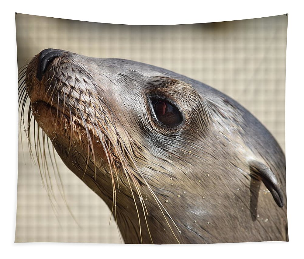 Sea Lion Pup Tapestry featuring the photograph Sea Lion Pup by Eric Johansen